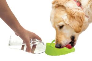 Pets-Agua